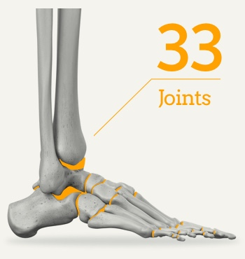 拇指外翻/拇趾外翻/Bunion 33-joints-in-the-human-foot