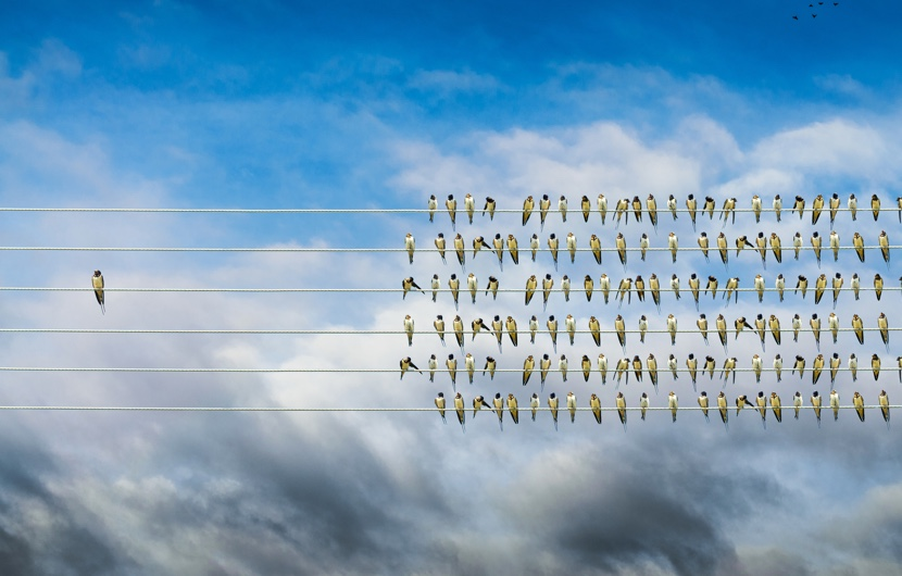 拇指外翻/拇趾外翻/Bunion bird-on-a-wire-stands-out-from-the-crowd